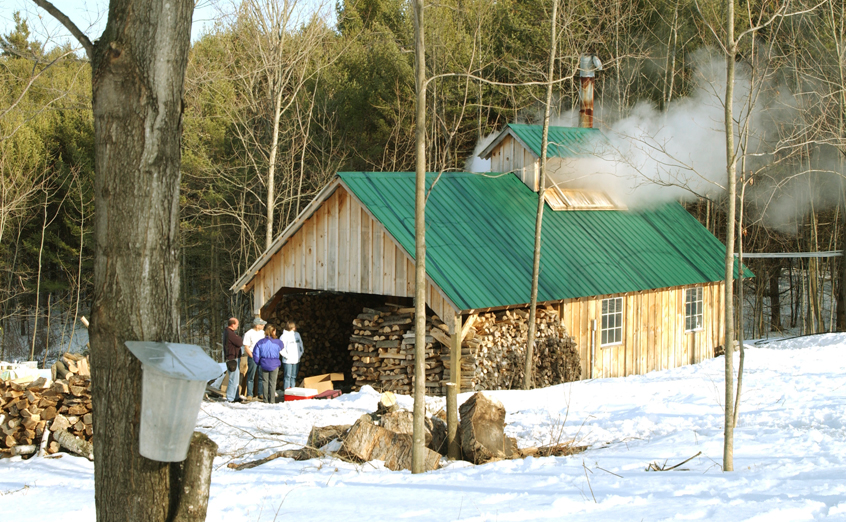 Vermont Maple Syrup Insurance